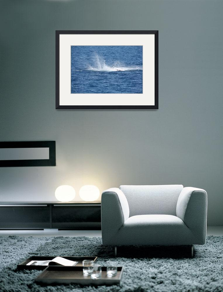 """""""NaP_ Whale Watching103&quot  by nevilleprosser"""