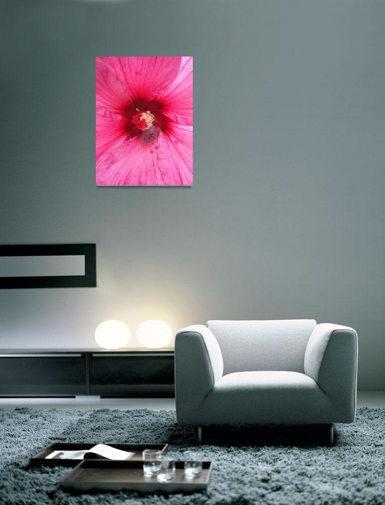 """Pink hibiscus - extreme closeup&quot  (2008) by MariaK"