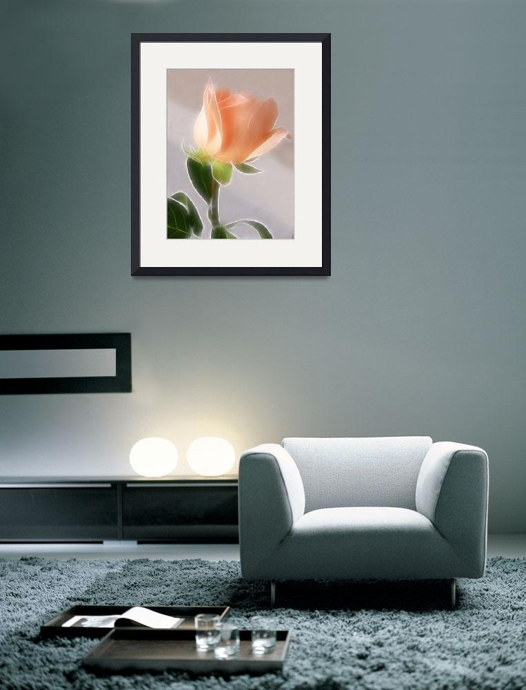 """""""Pale Pink Cut Rose 1 Angelic""""  (2009) by ChristopherInMexico"""