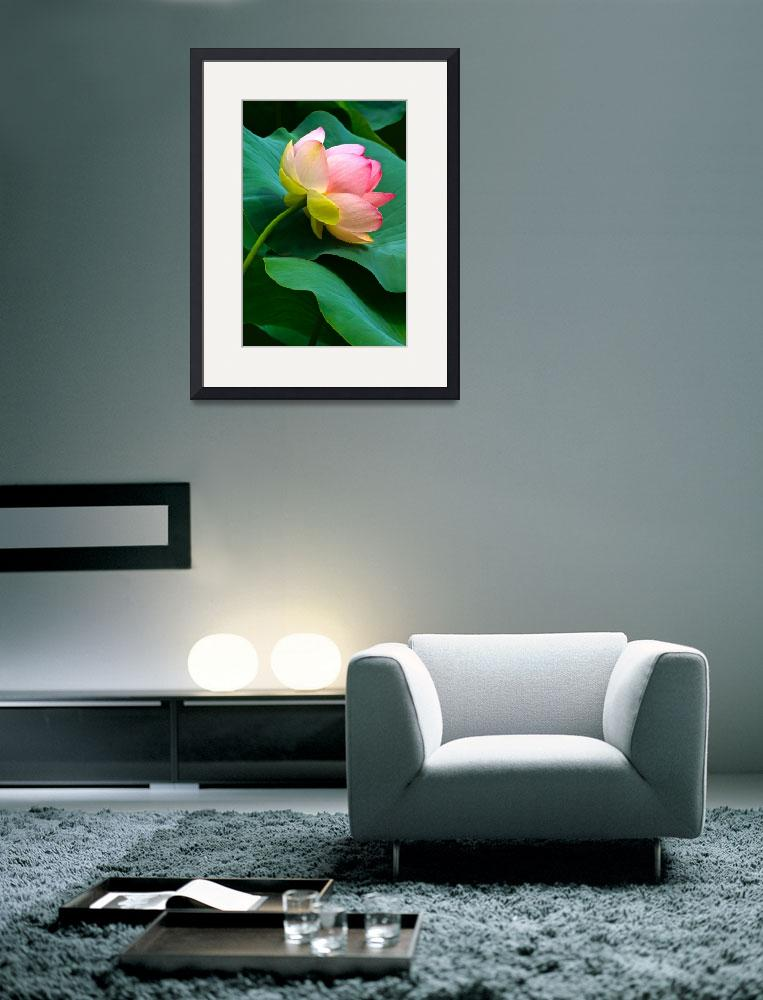 """""""Cradled Lotus Blossom&quot  (2012) by LightHeart"""