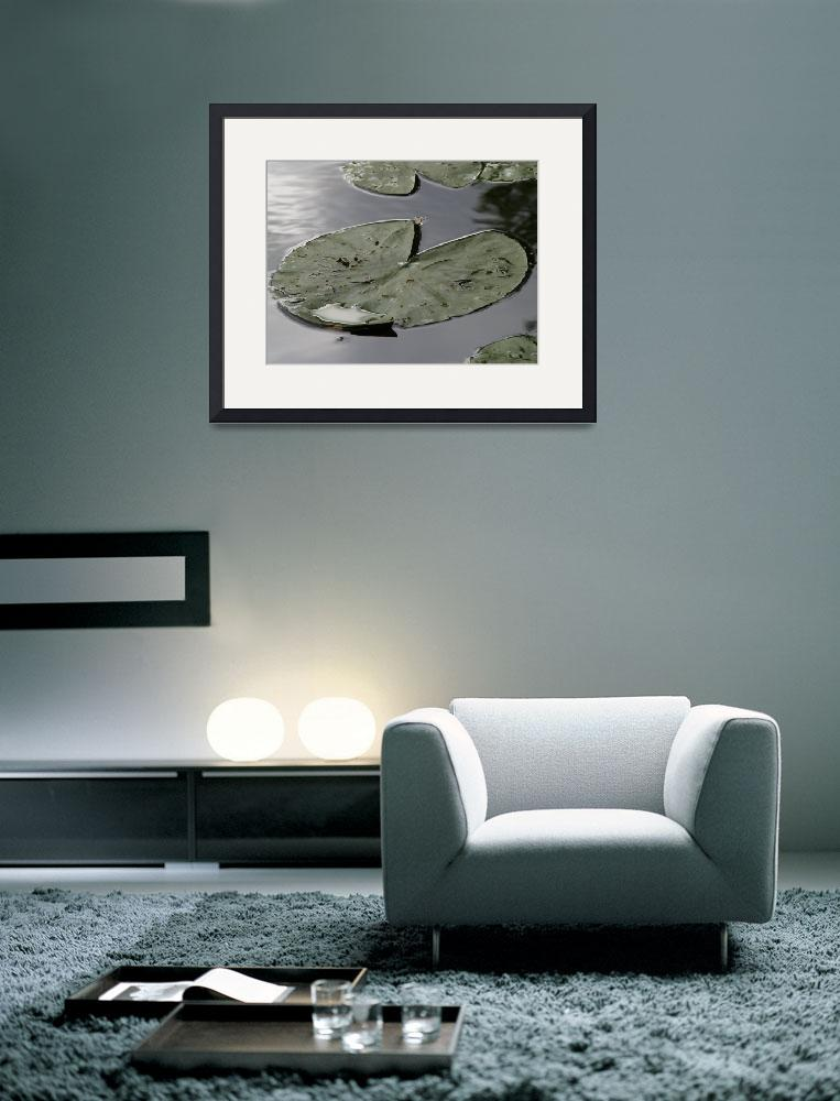 """""""Lily Pad #2&quot  by simonadams"""