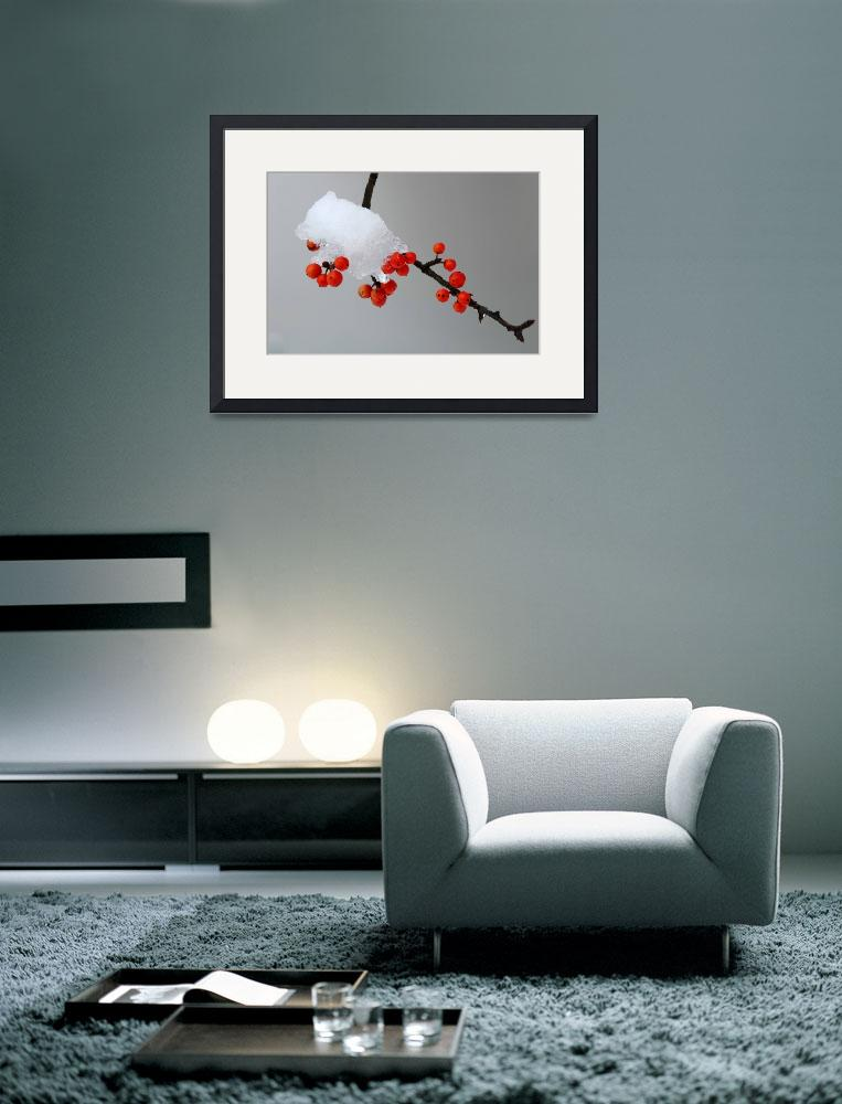 """""""Berries in Snow""""  (2010) by colgdrew"""