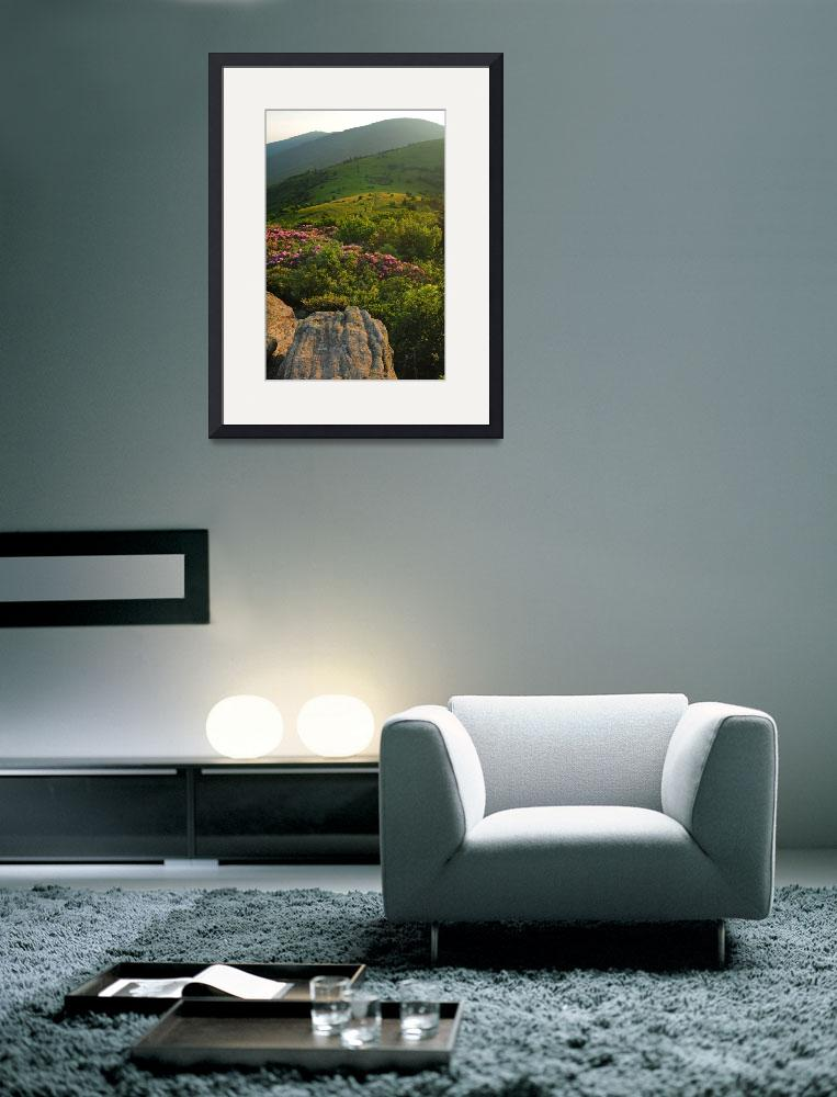"""""""Roan Mountain from Jane Bald  Rhododendron Dusk Li&quot  by toddbush"""