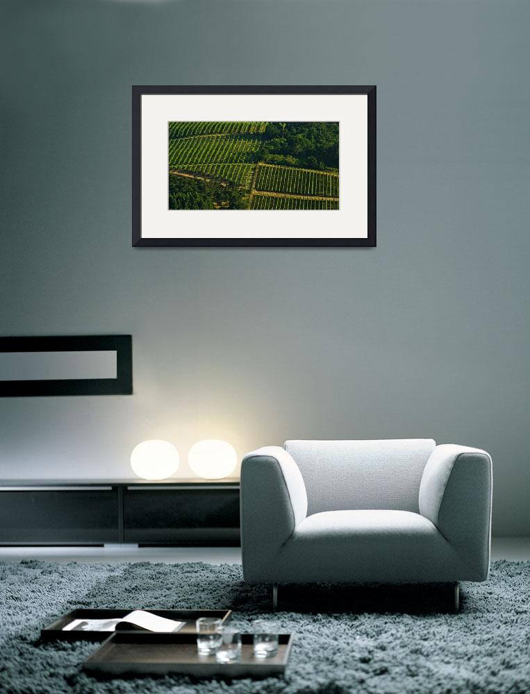 """""""Vineyard Geometry&quot  (2014) by boppintheblues"""
