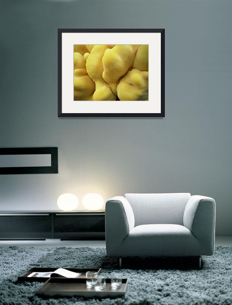"""""""yellow fungus&quot  (2008) by Dessie"""