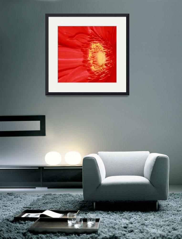 """""""Red Gerbera Daisy&quot  (2009) by rayjacque"""