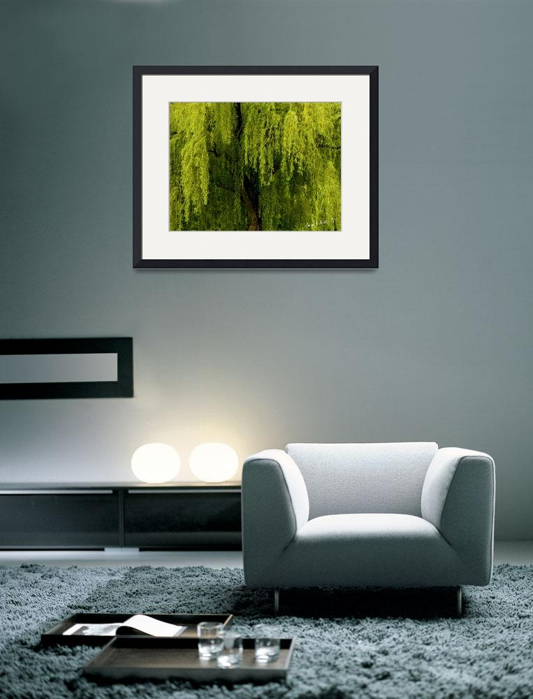 """""""Enchanting Weeping Willow Tree&quot  (2011) by PhotographsByCarolFAustin"""