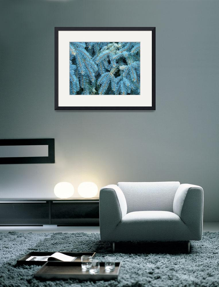 """""""Blue Spruce Conifer Tree branches Art prints&quot  (2014) by BasleeTroutman"""