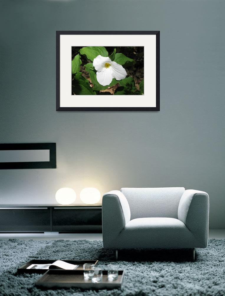 """""""White Trillium&quot  (2010) by NorthPointImages"""