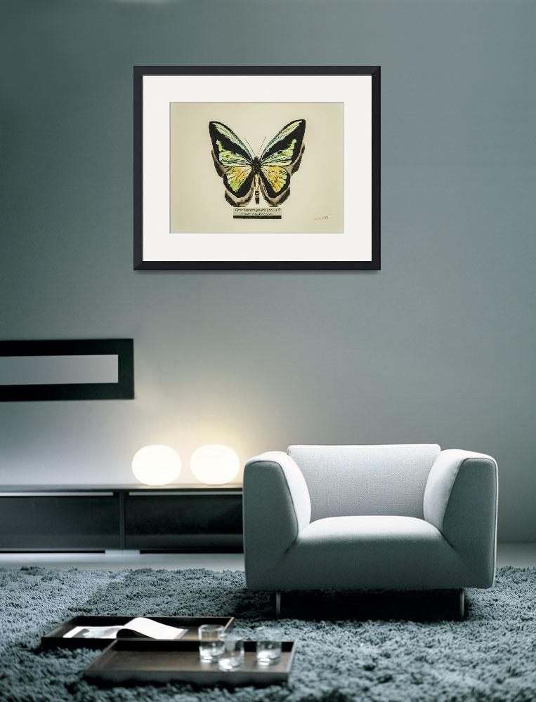"""""""Butterfly Ornithoptera goliath procus&quot  (2014) by CarlosSegui"""
