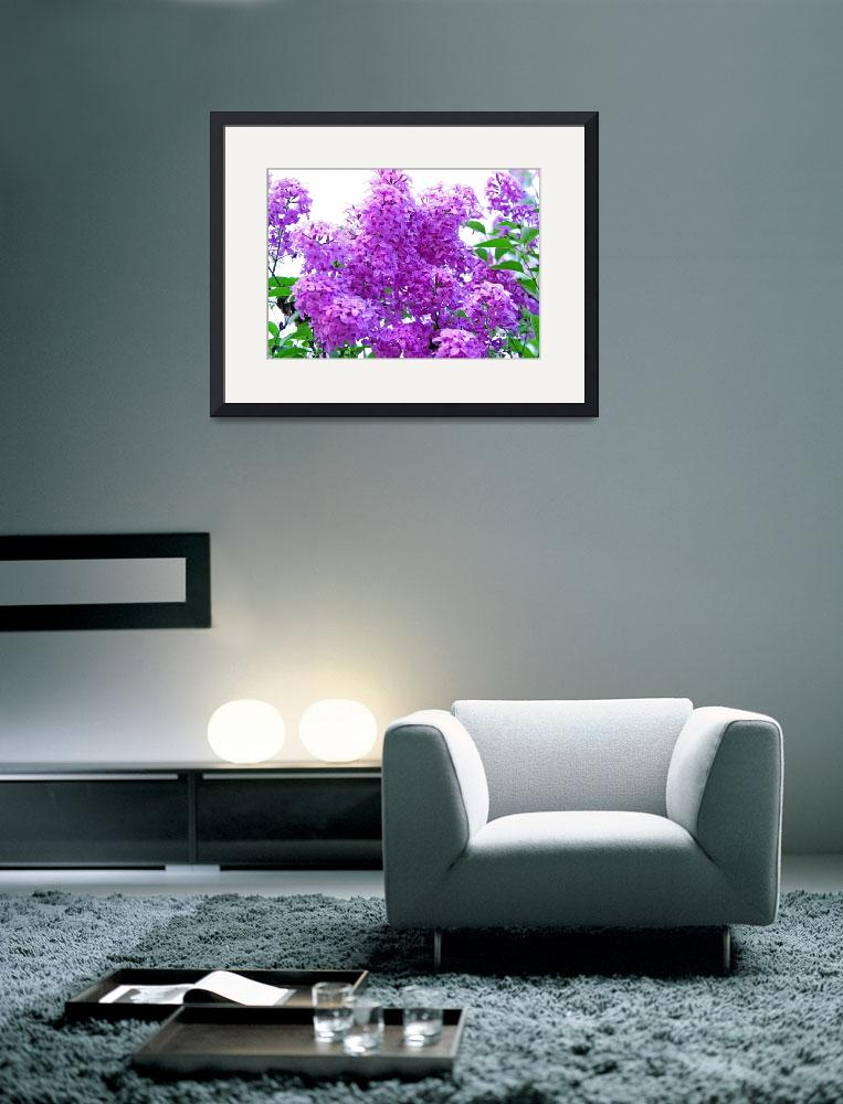"""""""Fragrant Lilacs&quot  (2007) by daisyjoan"""