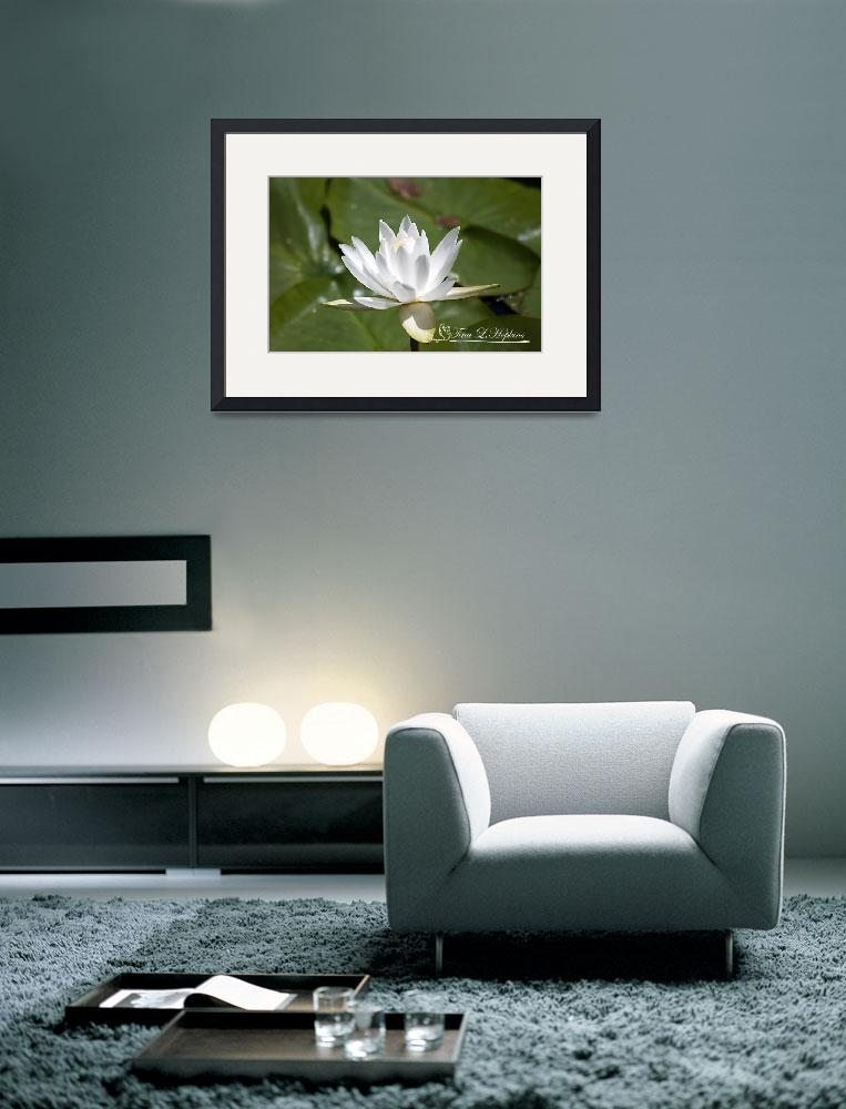 """""""Water Lily 20120627_34a&quot  (2012) by Natureexploration"""