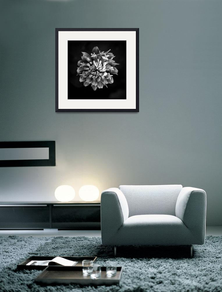 """Clover In Black And White&quot  (2011) by bavosiphotoart"