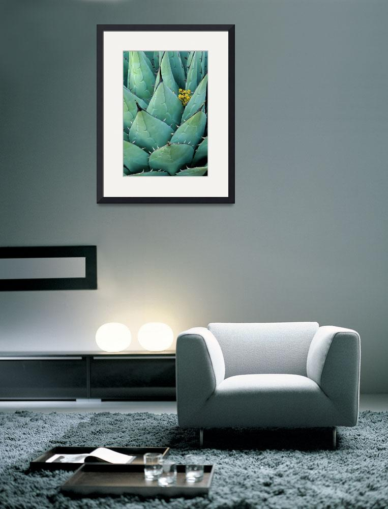 """""""Century Plant and Flower&quot  (2000) by Inge-Johnsson"""