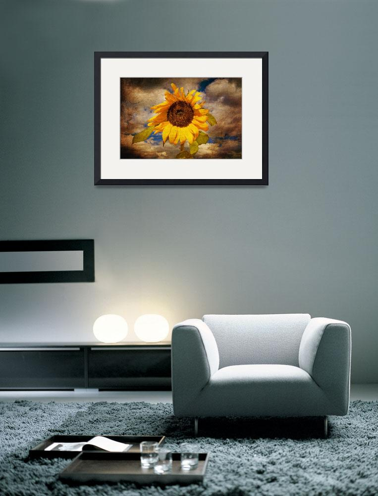 """""""sunflower&quot  (2010) by Palombafoto"""