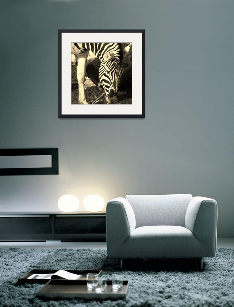 """Zebra&quot  (2013) by gallerymay"