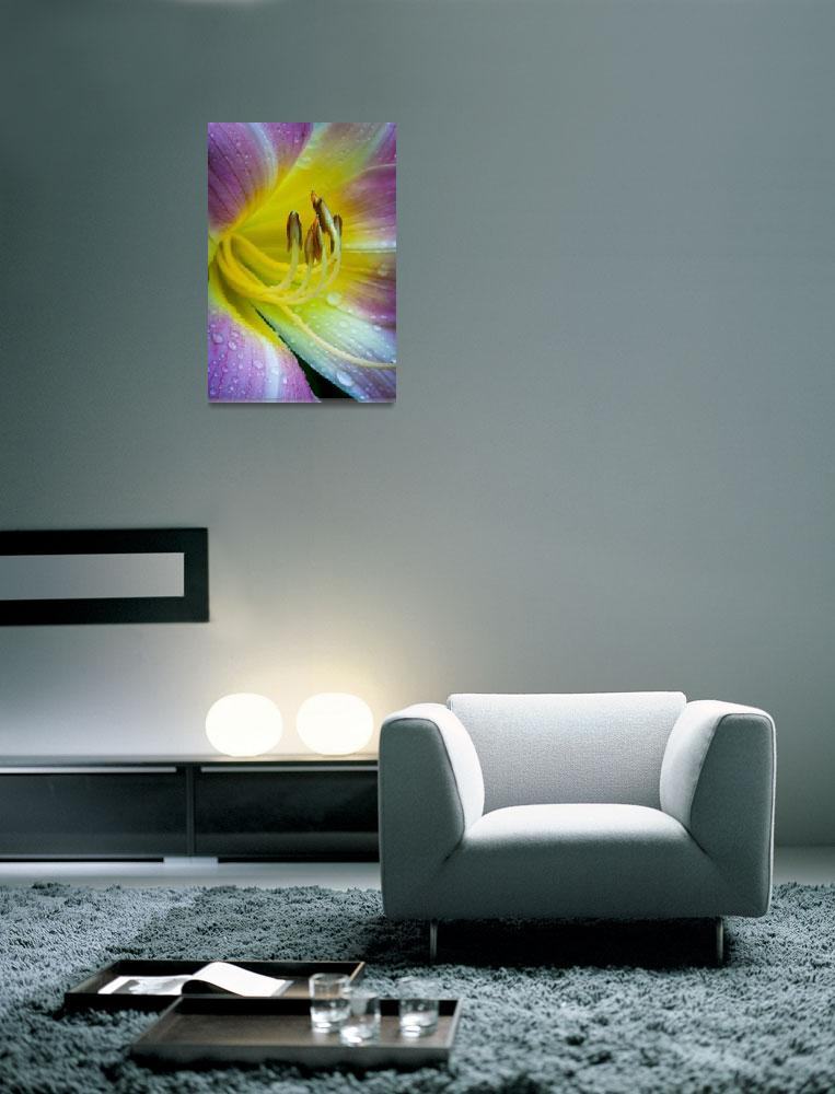 """""""Dew on lily&quot  (2011) by Inge-Johnsson"""