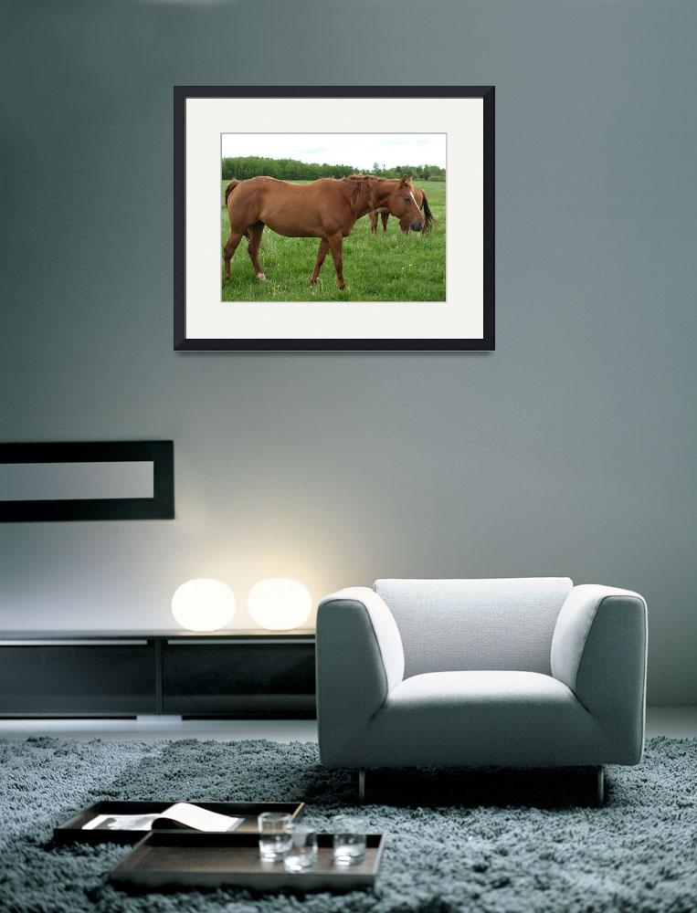 """""""horse 5&quot  (2009) by Albertphoto"""