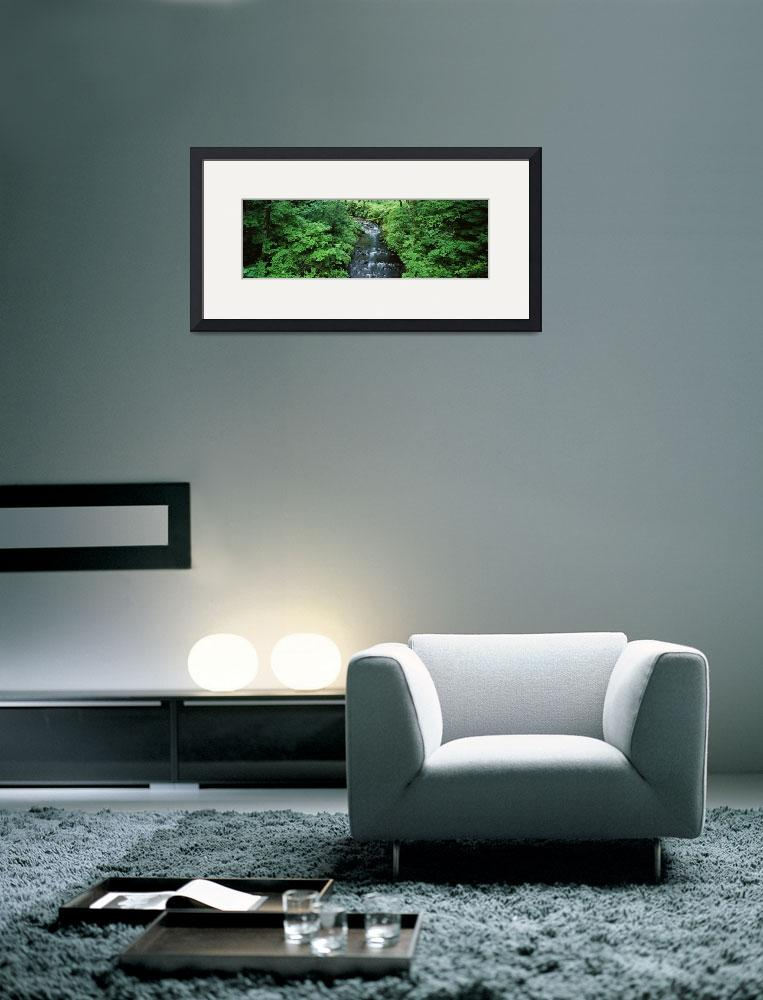 """""""Stream flowing through lush green brush&quot  by Panoramic_Images"""