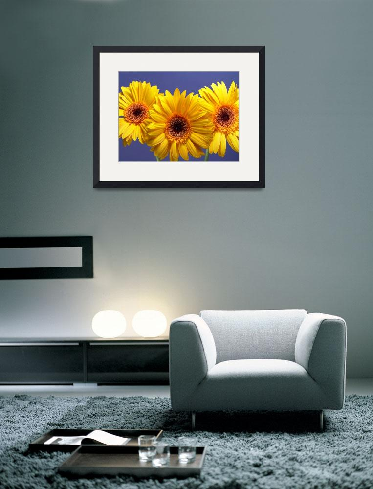 """""""Yellow Gerbera Daisies Buddy On Blue&quot  by Infomages"""