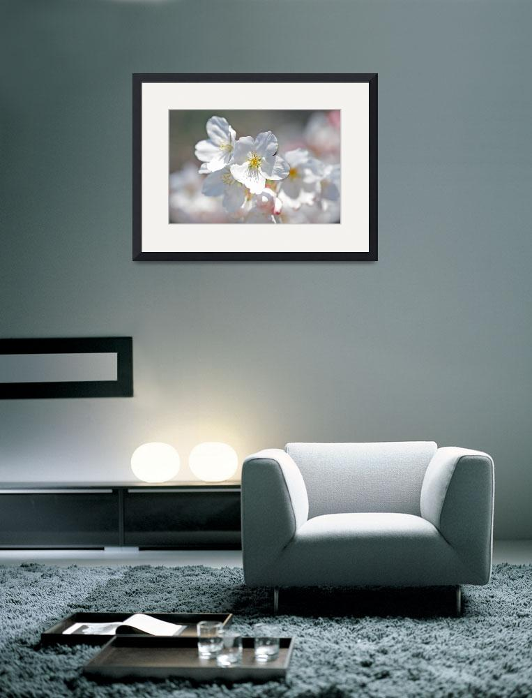 """""""Pure&quot  (2011) by ImageArt-Photography"""