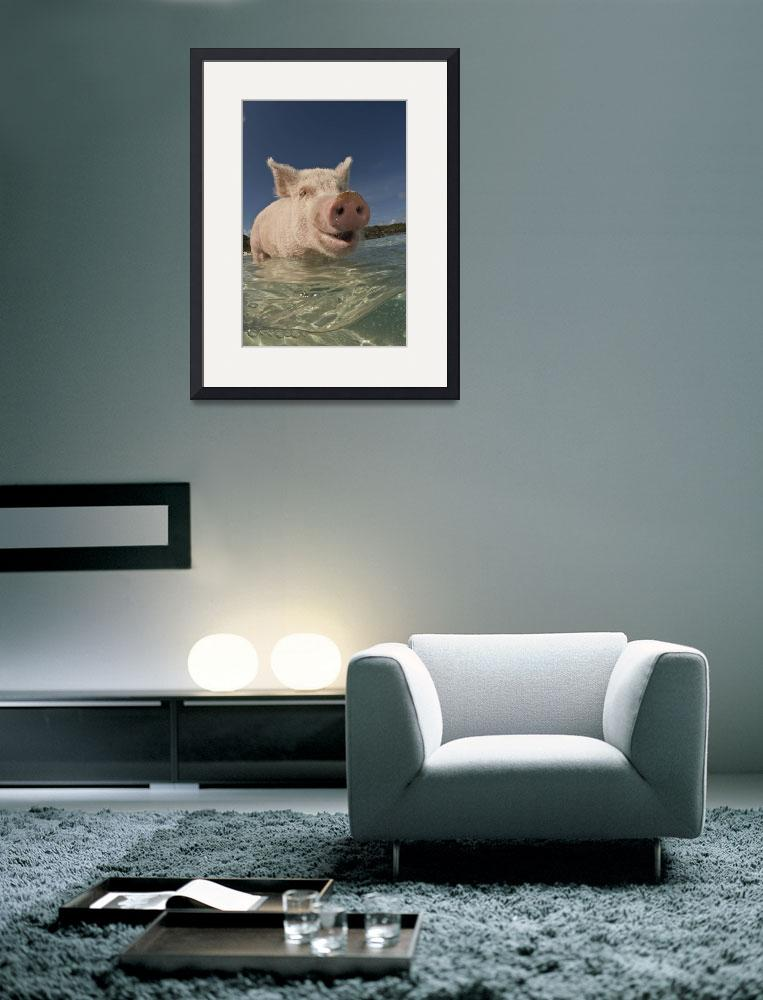 """""""Happy Pig&quot  (2008) by markstrickland"""