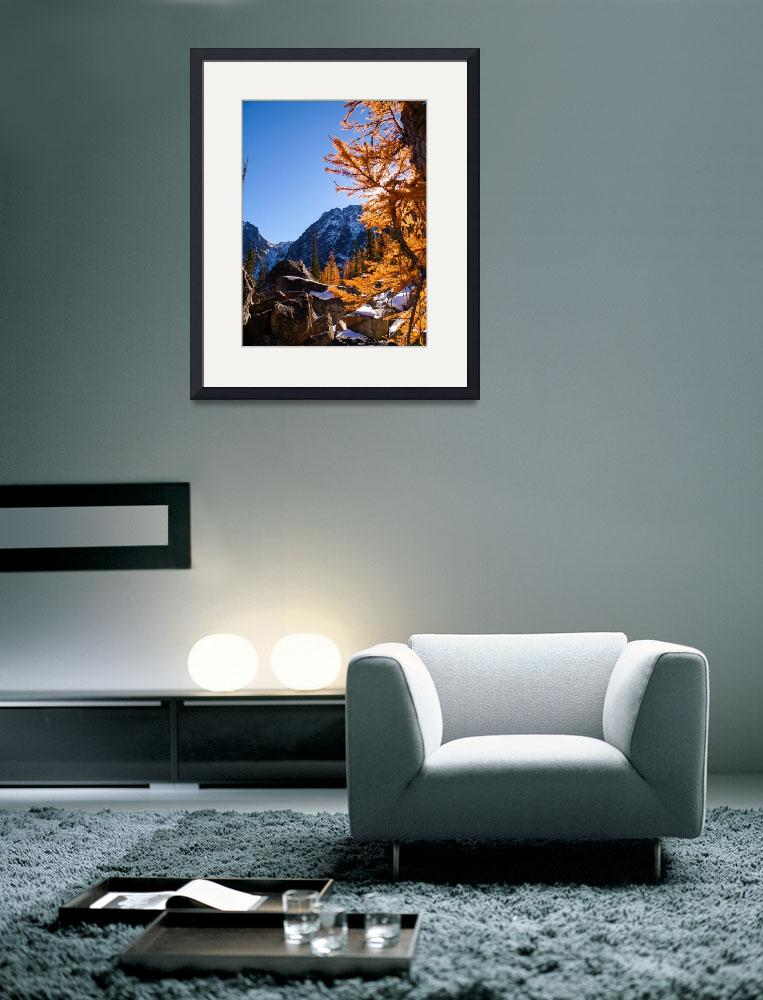 """""""Larch and rock, Enchatments, WA""""  (2013) by dgolden"""