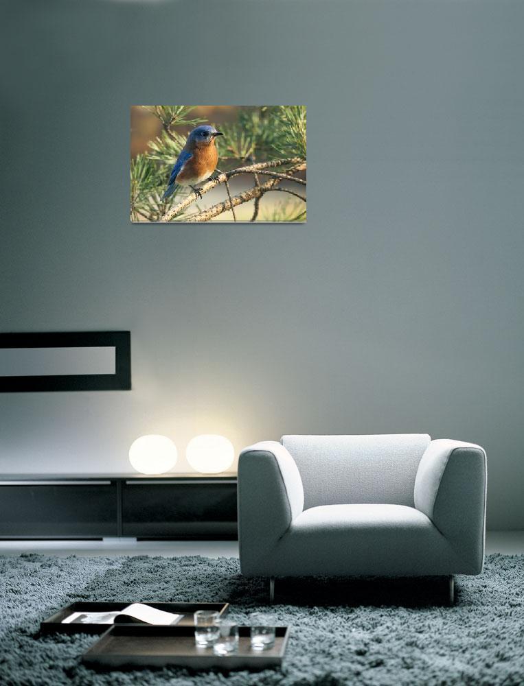 """Morning Bluebird&quot  (2012) by dalerobert"