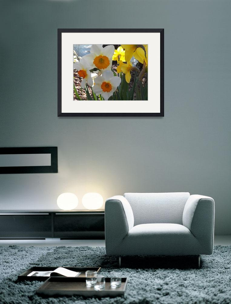 """Spring Daffodil flowers&quot  (2014) by vpicks"