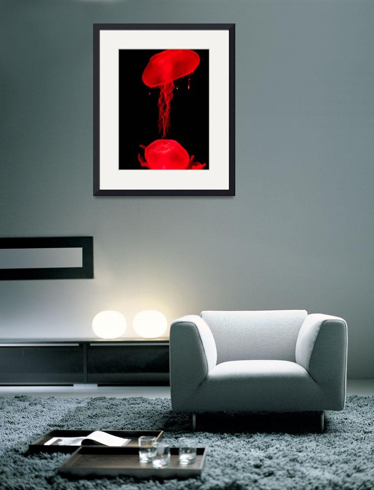 """""""Red Jellyfish&quot  (2008) by drake"""