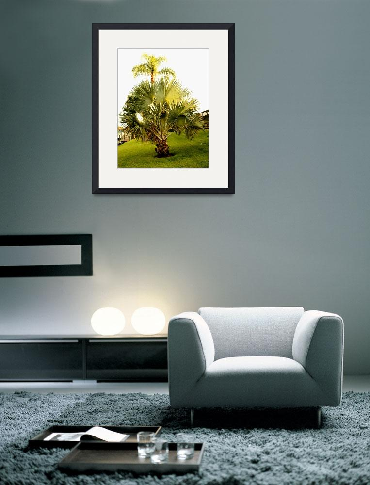 """Palm and Palmetto&quot  (2009) by rayjacque"