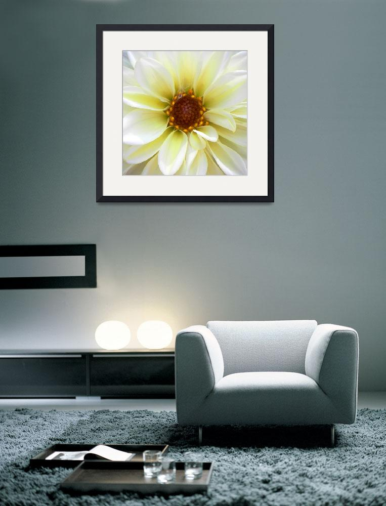 """""""Creamy Dahlia&quot  (2008) by mikepdx"""