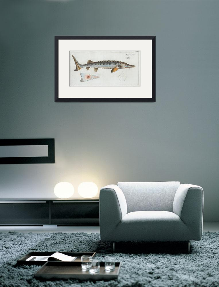 """""""Vintage Illustration of a Sturgeon (1785)&quot  by Alleycatshirts"""