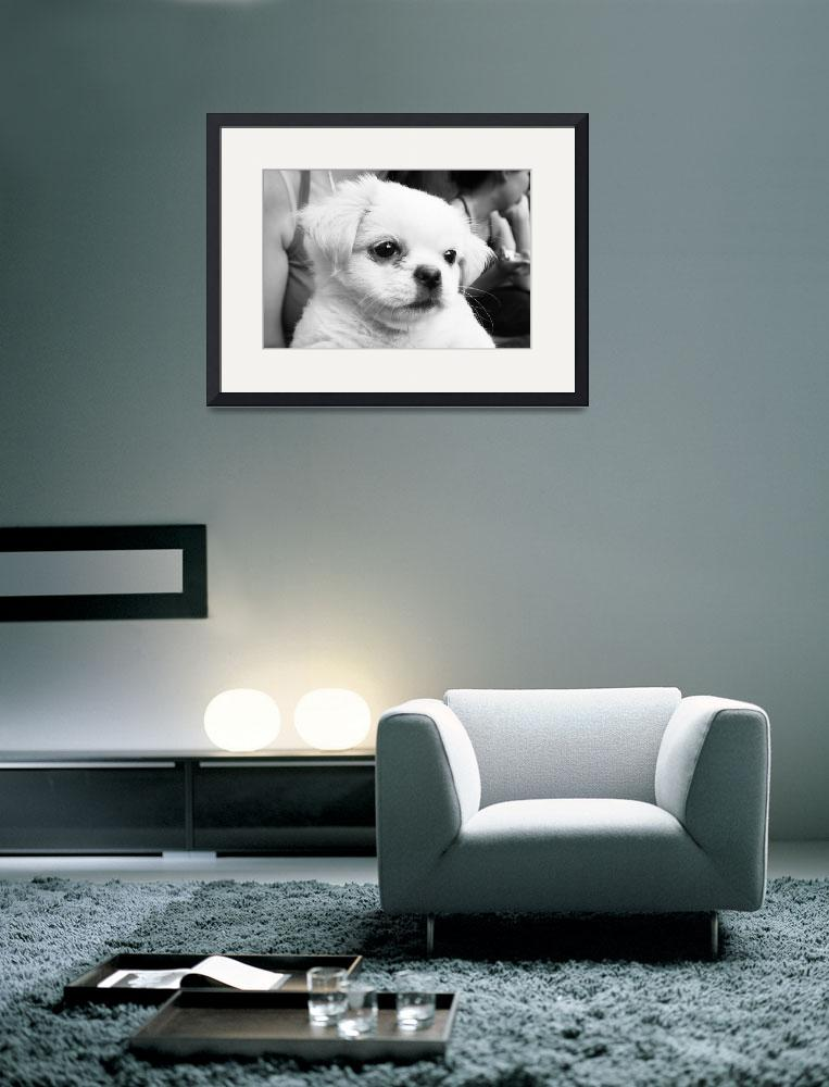 """""""The dog named Qing Qing&quot  by raymondhalim"""
