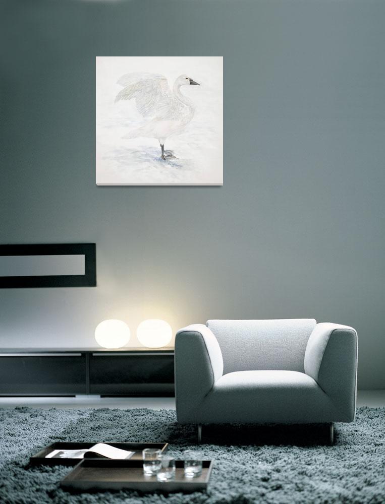 """""""Tundra Swan""""  (2006) by LisaMclaughlin"""