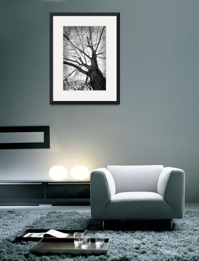 """""""Black and White Autumn Tree&quot  (2010) by lightningman"""