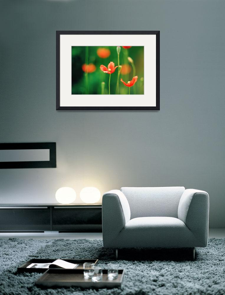 """Poppy Fine Art Floral Photography&quot  (2010) by magnesina"