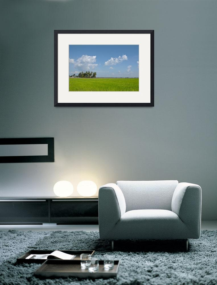 """""""paddy field&quot  (2008) by zoolfadhlie"""