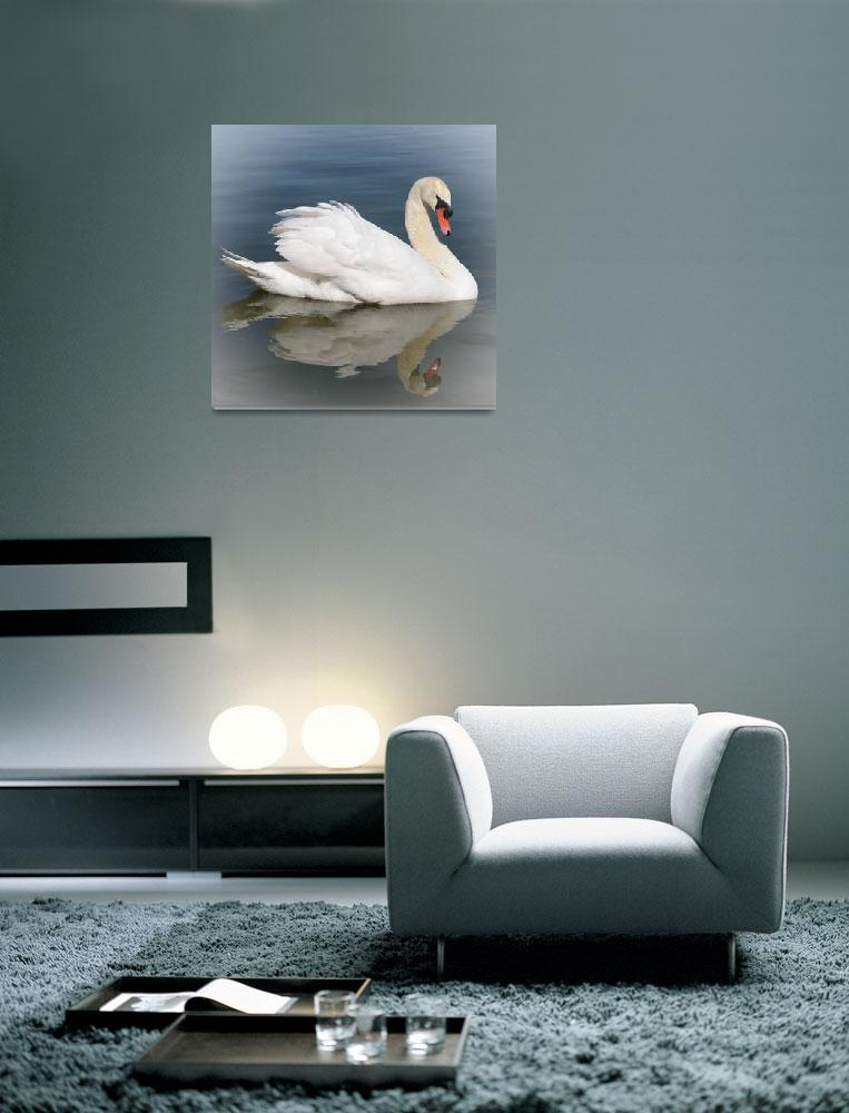 """Reflection of Swan with Vignette""  by Groecar"