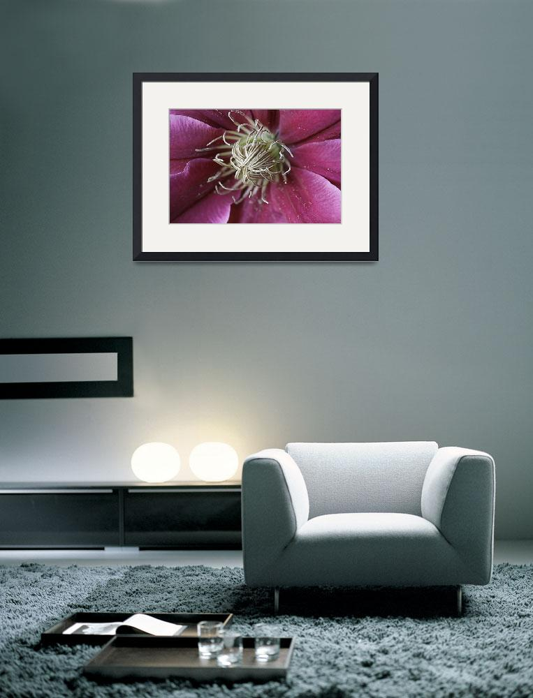 """PINK CLEMATIS 2&quot  (2013) by edesigns15"