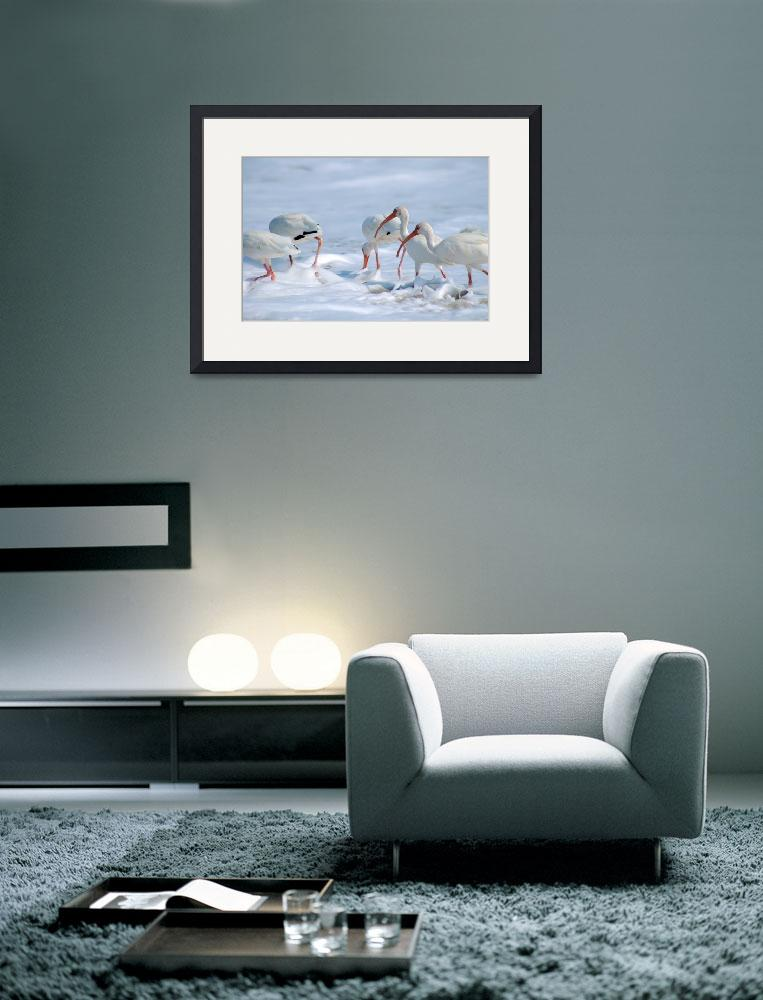 """""""Ibis in Snow?""""  (2008) by orphieg"""