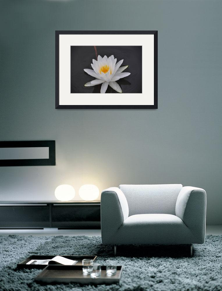 """""""Floating Lilly Pad Flower&quot  by MindFleur"""