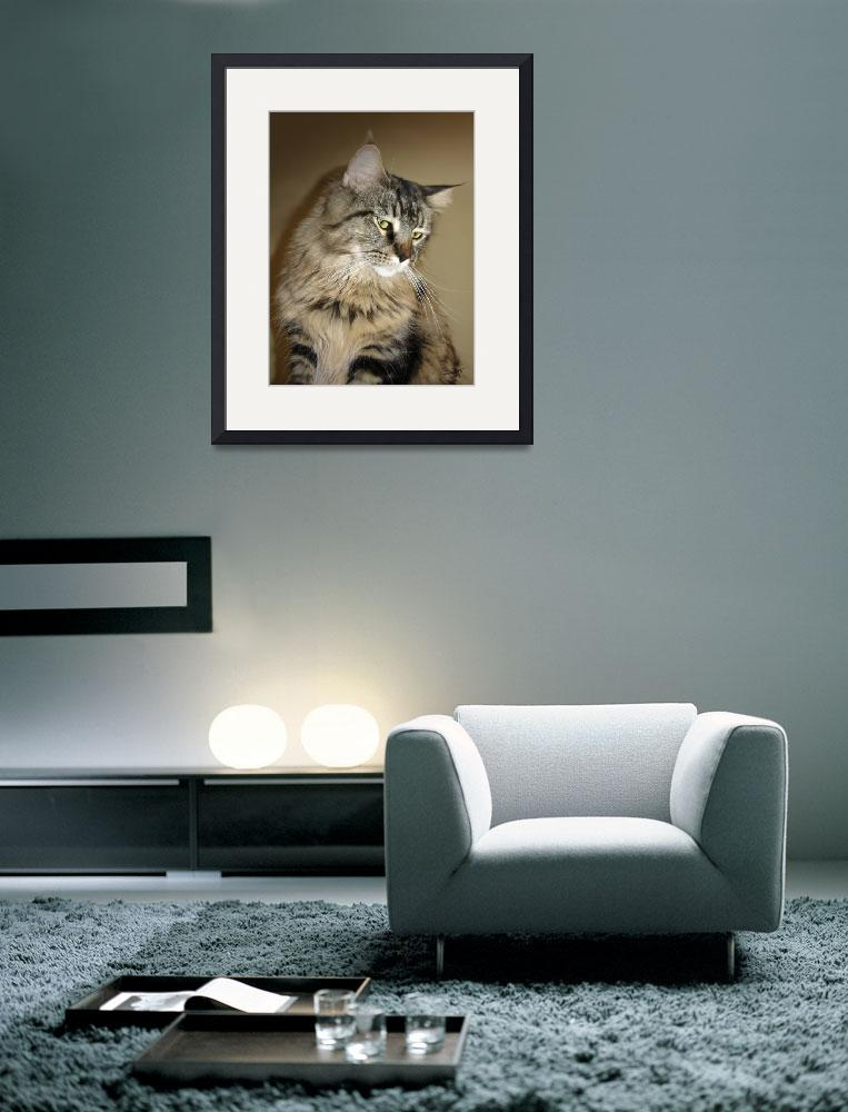"""Portrait of Maine Coon Annie Lulu&quot  (2011) by spadecaller"