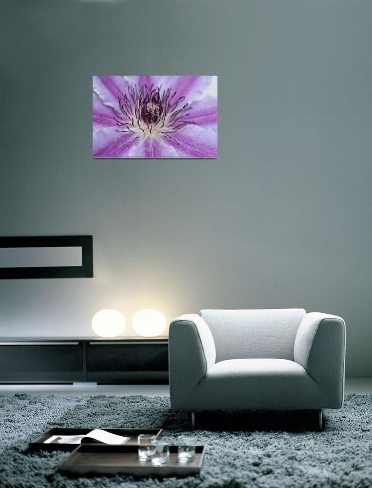 """""""Clematis""""  (2011) by StevePurnell"""