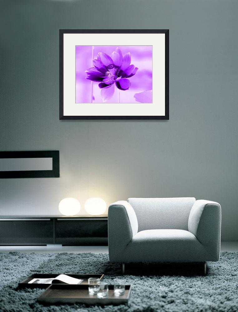 """""""Violet Lotus 2&quot  (2013) by TheNorthernTerritory"""