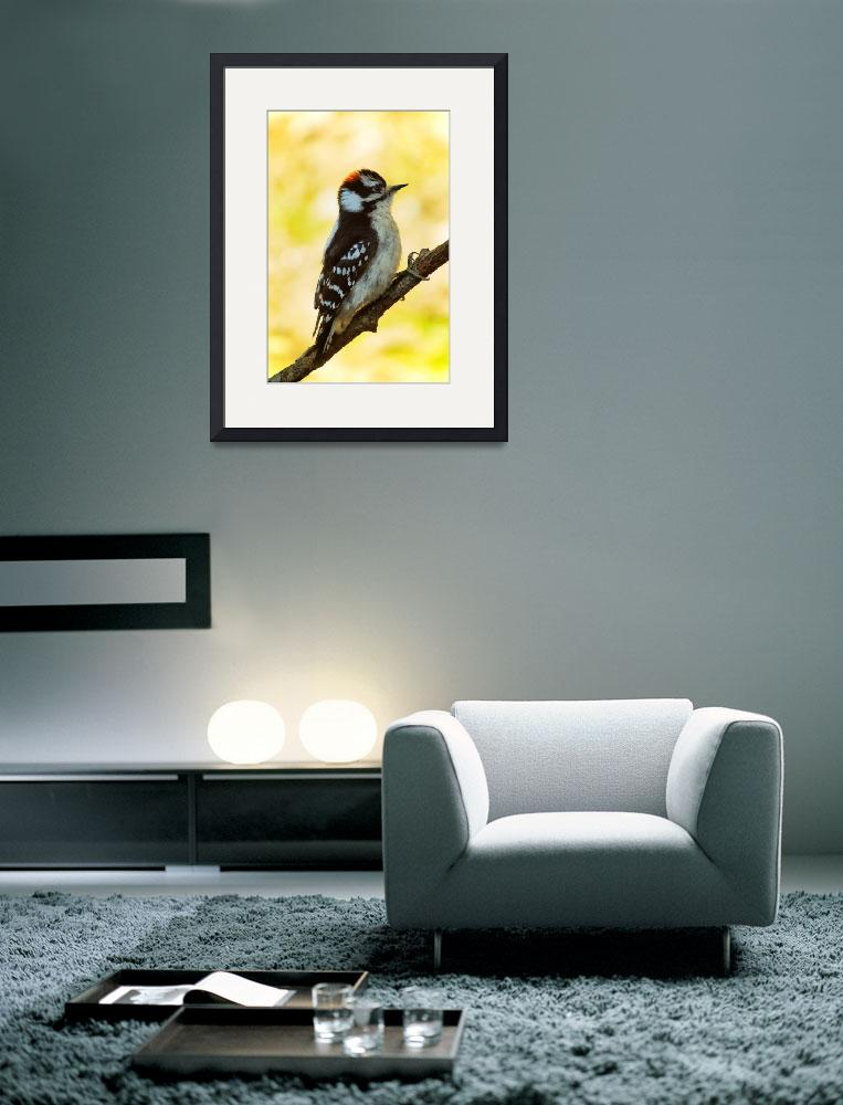 """downy woodpecker""  (2008) by gabrieleswanson"