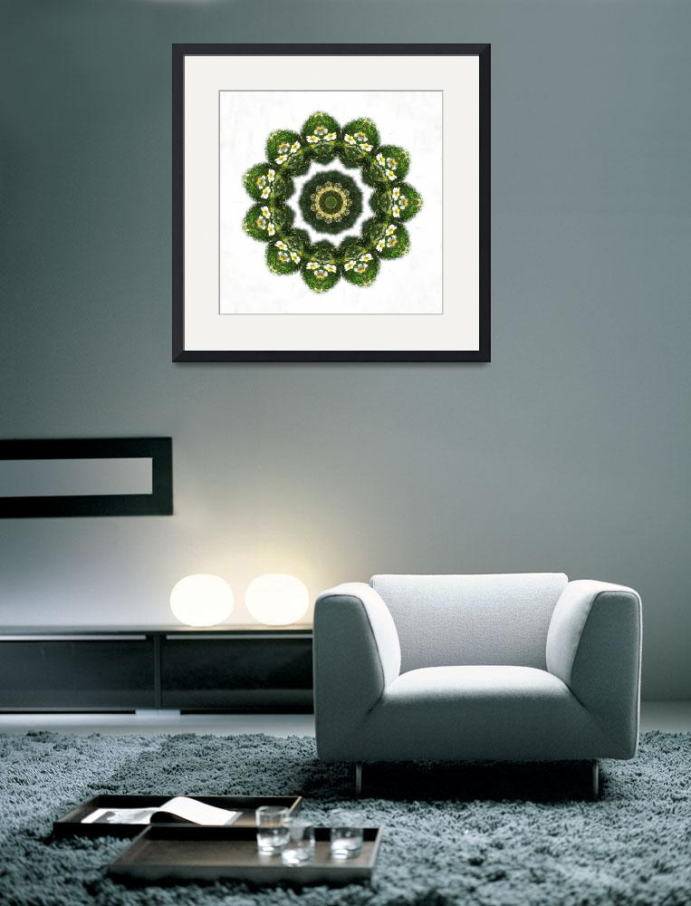 """Little White Wildflower Kaleidoscope Art 4""  (2009) by ChristopherInMexico"