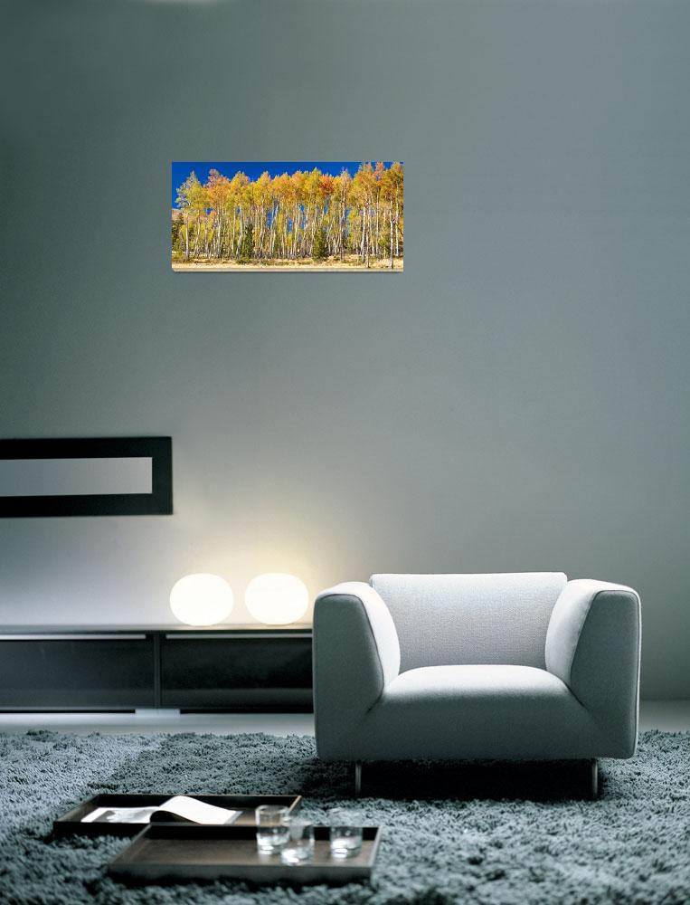 """Colorful Aspen Panorama""  (2013) by lightningman"