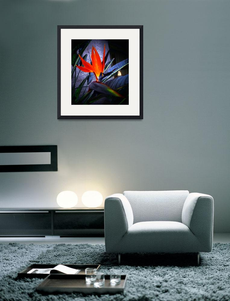 """""""Bird of Paradise on Granite""""  (2009) by ChrisCrowley"""