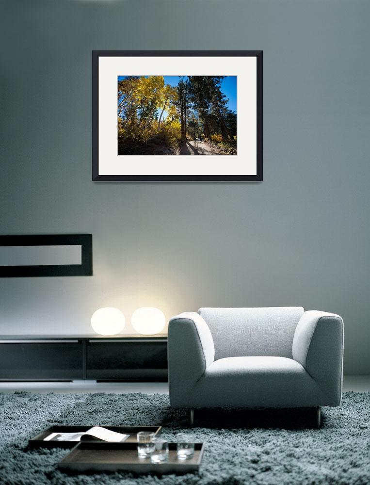 """""""Aspens and Road, Beaver Pond, Sierra Nevadas&quot  (2013) by SederquistPhotography"""